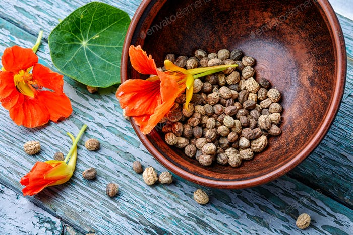 Seeds,and flowers of nasturtium