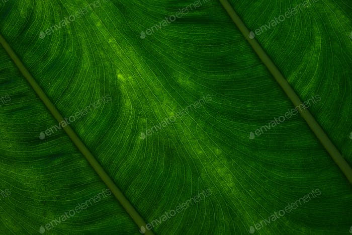 Fond de la feuille vert foncé