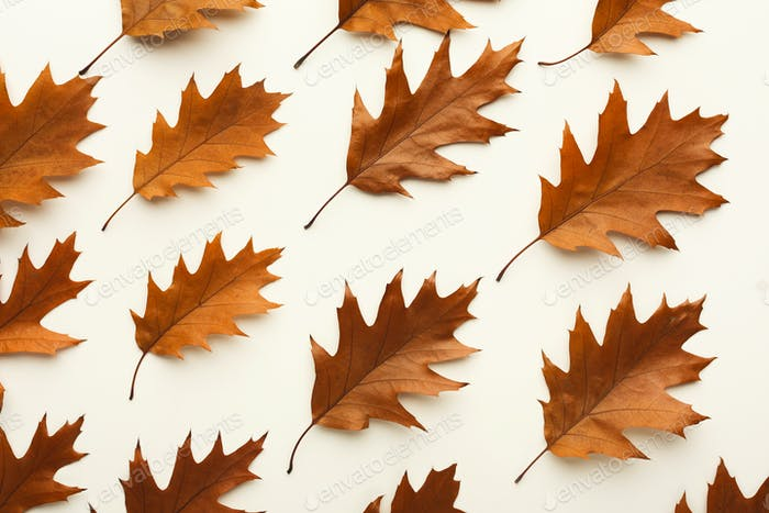 Fall brown leaves pattern isolated on white background