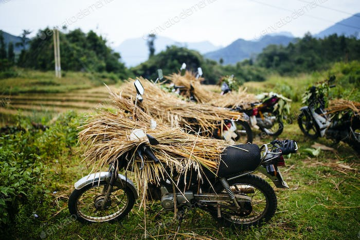 Motorbikes laden with rice stalks in the northern mountains of Vietnam.