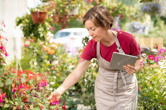 Young female gardener with tablet bending over flowerbed