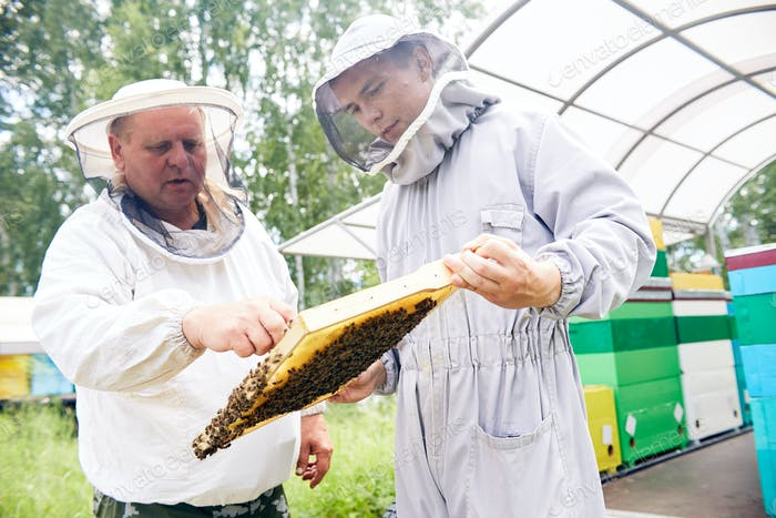 Two Workers in Apiary