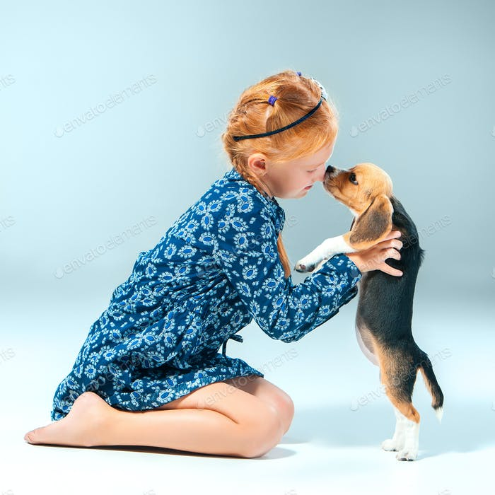 The happy girl and a beagle puppie on gray background