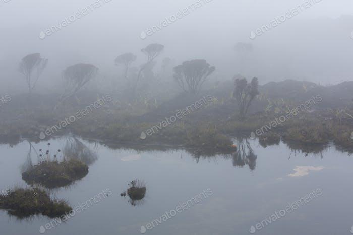 Beautiful morning landscape on Mount Roraima