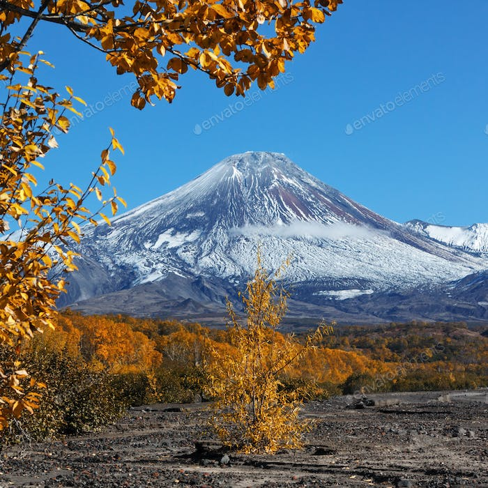 Colorful Autumnal Forest at Foot of Active Volcano on Kamchatka Peninsula