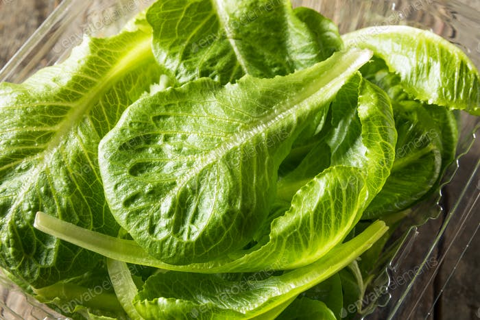 Raw Green Bio Romaine Blätter