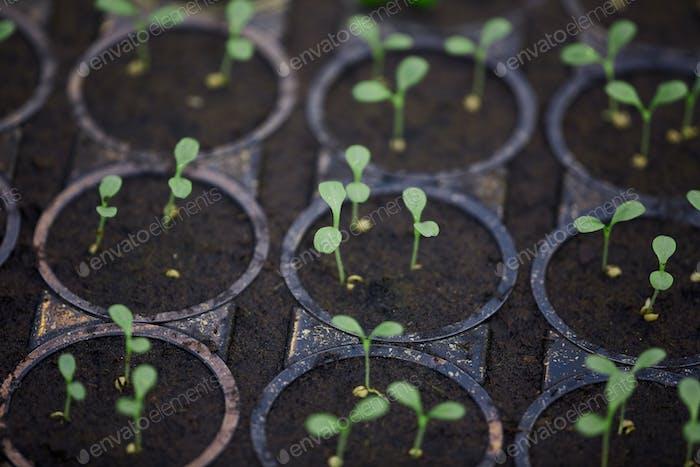 Pflanzengärtnerei