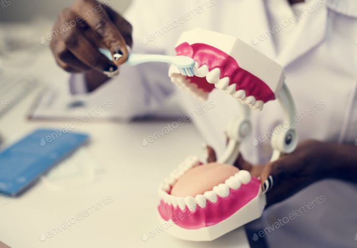 Dental jaw model at dentist clinic
