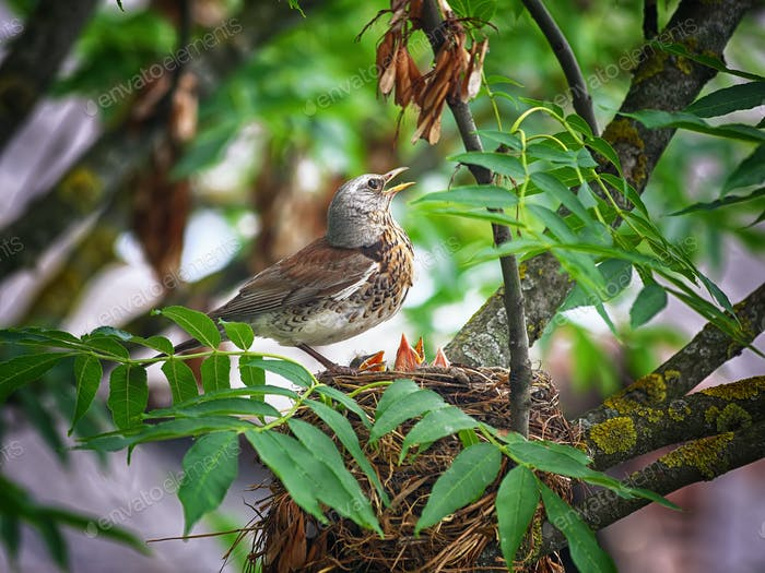 bird in the nest feeding their Pets