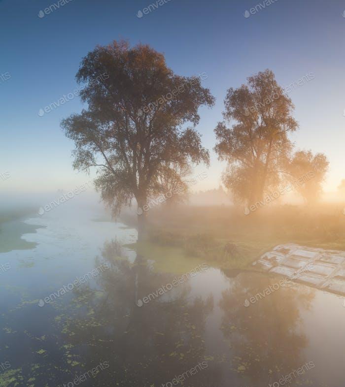 Beautiful morning mist landscape near a small river