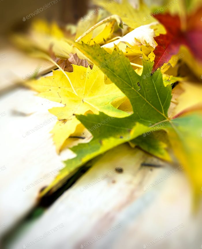 Autumn leaves abstract closeup