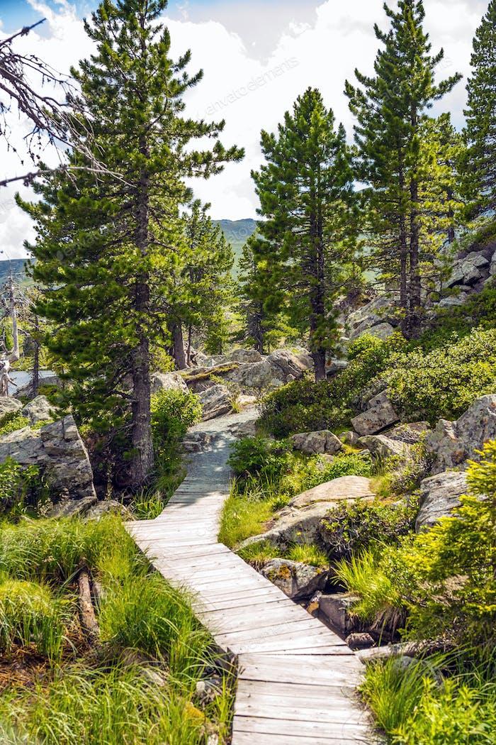 Wooden pathway