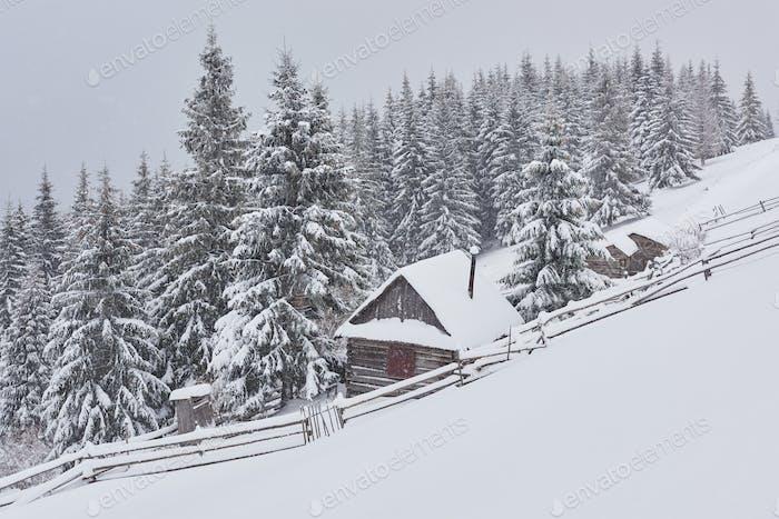 Gemütliche Holzhütte hoch in den verschneiten Bergen. Tolle Pinien auf dem Hintergrund. Verlassene Kolyba
