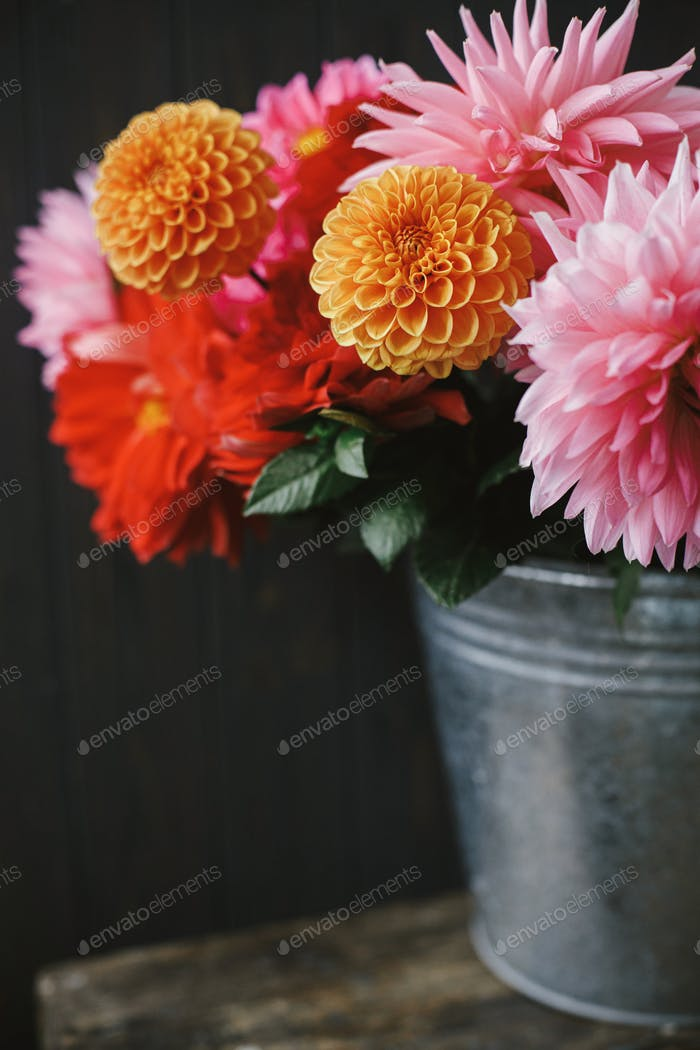 Beautiful pink and red dahlias and asters flowers in metal bucket on rustic wood. Autumn