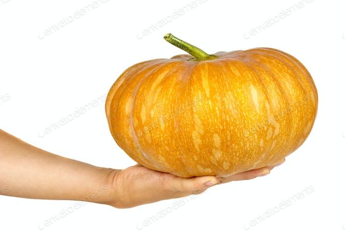 Hand holding orange pumpkin