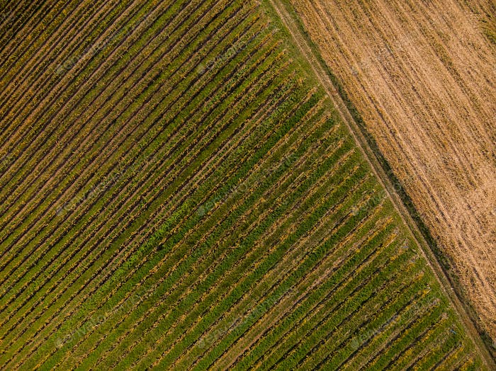 Abstract pattern in vineyards, aerial drone view