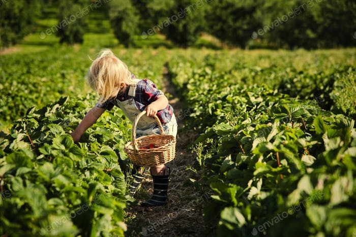 Kid in strawberry farm