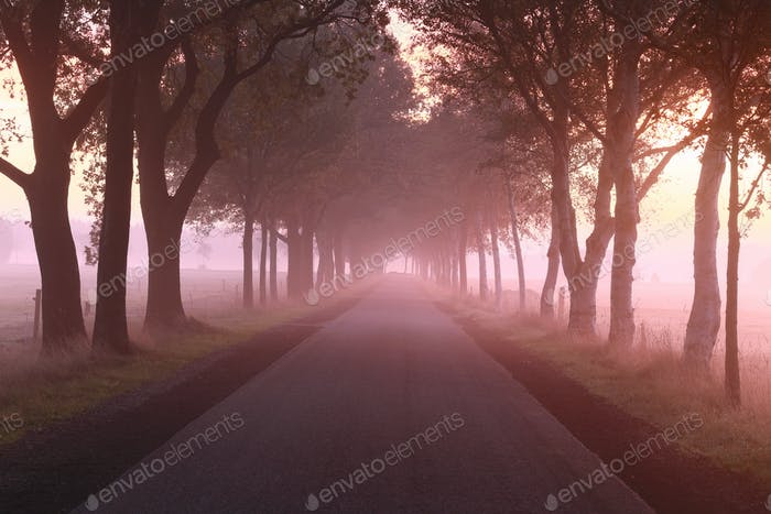 road between trees at misty purple sunrise