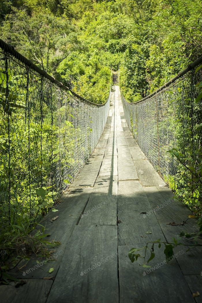 Forest Footbridge Guatemala