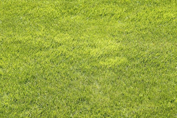 Natürlicher grüner Rasenhintergrund