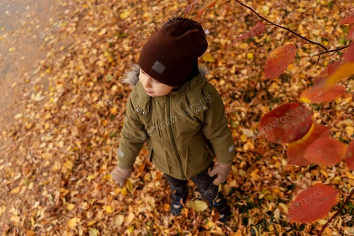 Young toddler boy on fallen leaves, autumn.