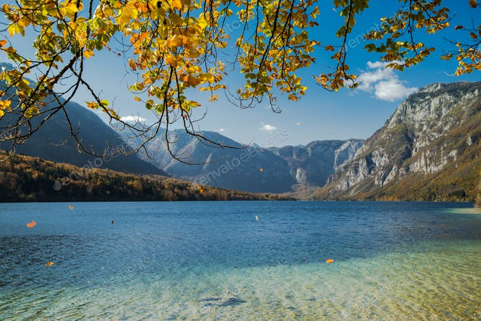 Golden leaves falling with wind at autumn at the lake Bohijn