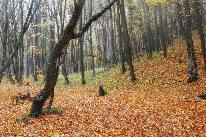 Autumn forest deep in mountain.