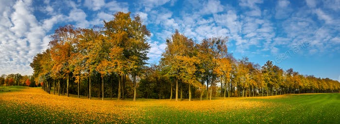 Yellow leaf fall, meadow in autumn park, panorama
