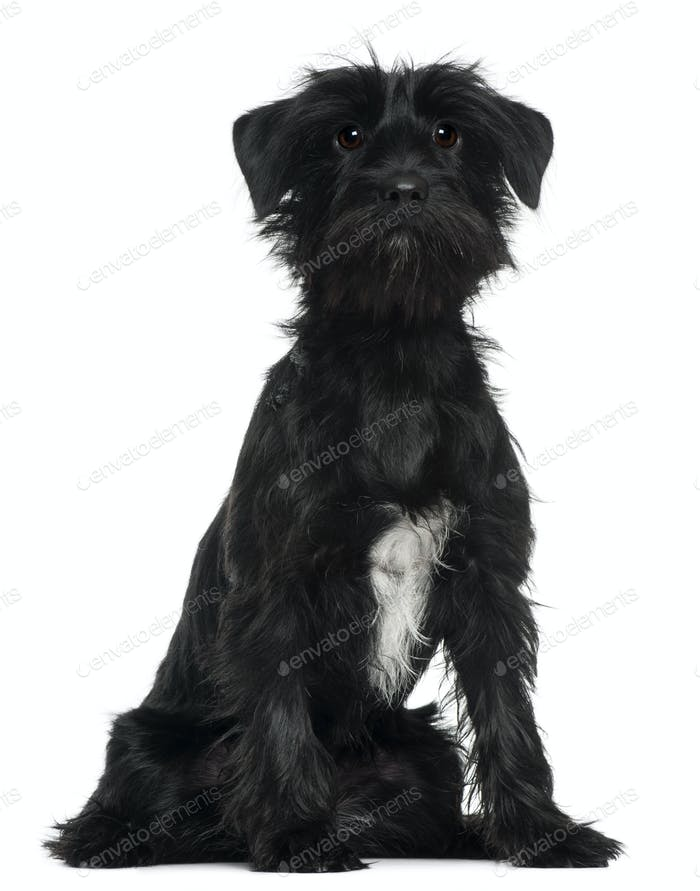 Cross Breed dog, 1 year old, sitting in front of white background