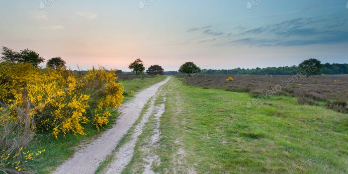 Sunset over Heathland near Hilversum