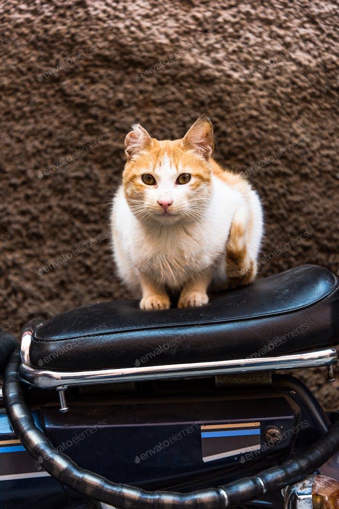 Katze sitzt auf dem Fahrrad in der Backstreet