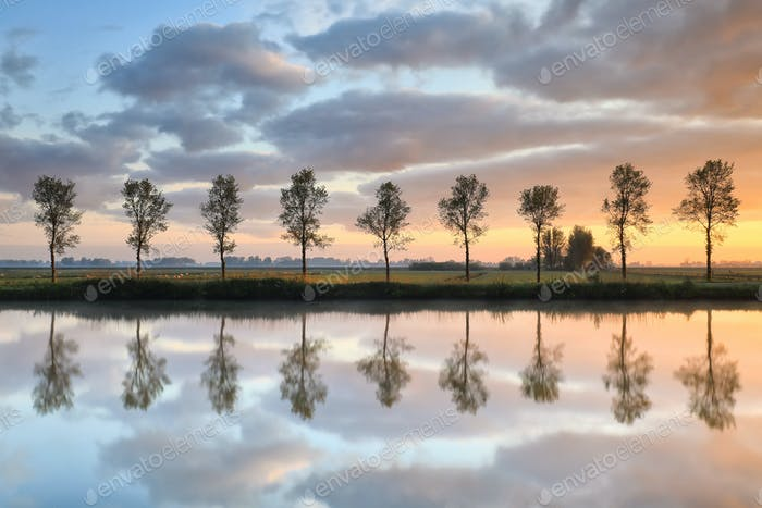 tree row reflected in river at sunrise