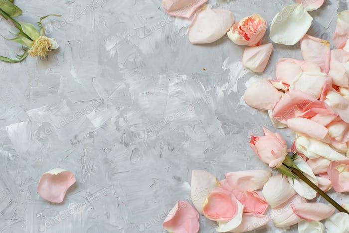 Rose petals and roses