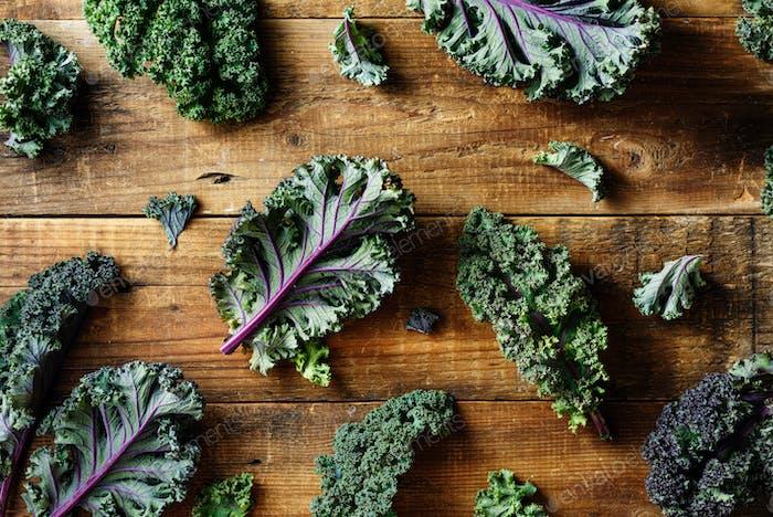Freshly cut purple Kale leaves