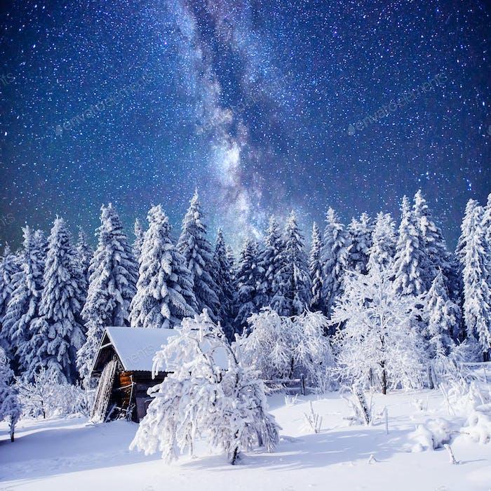 enchanting winter tale