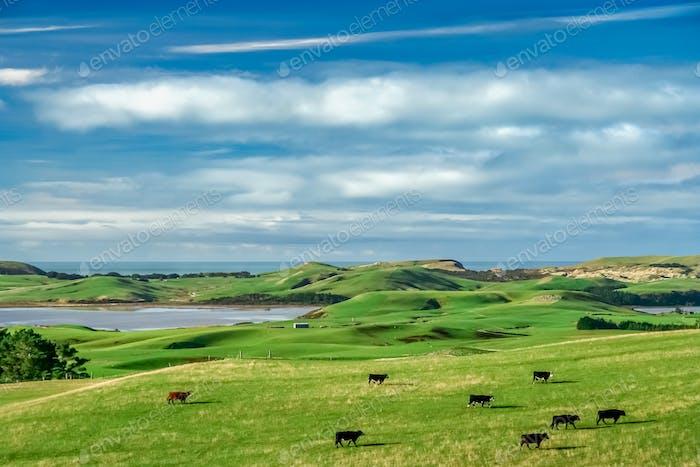 Endless green pasture