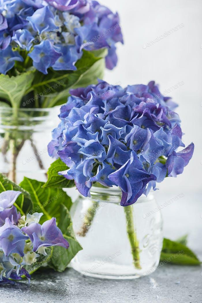 Erstaunliche blaue Hortensien Blumen