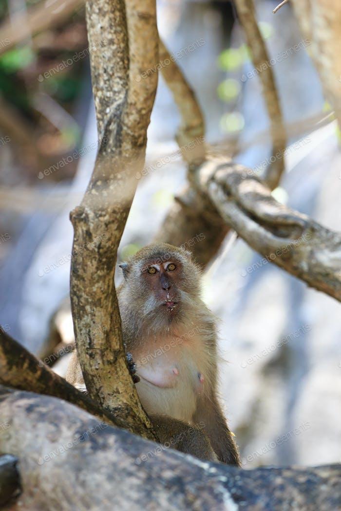 Monkey on Monkey Beach Phi Phi