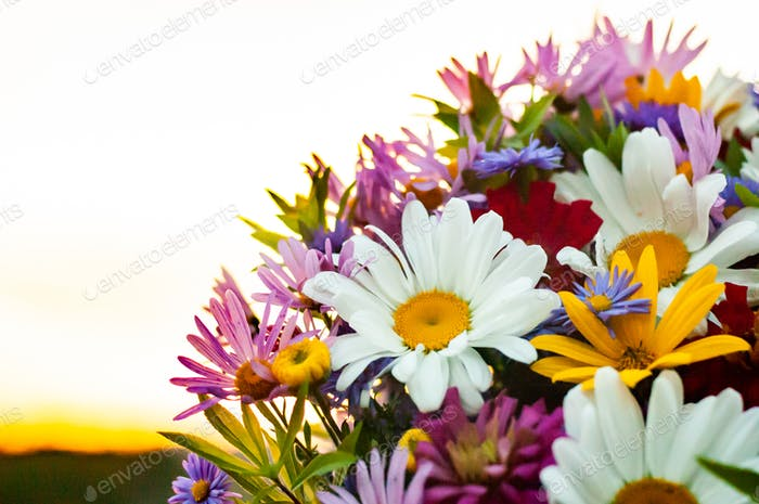 Bouquet from a camomile and other flowers