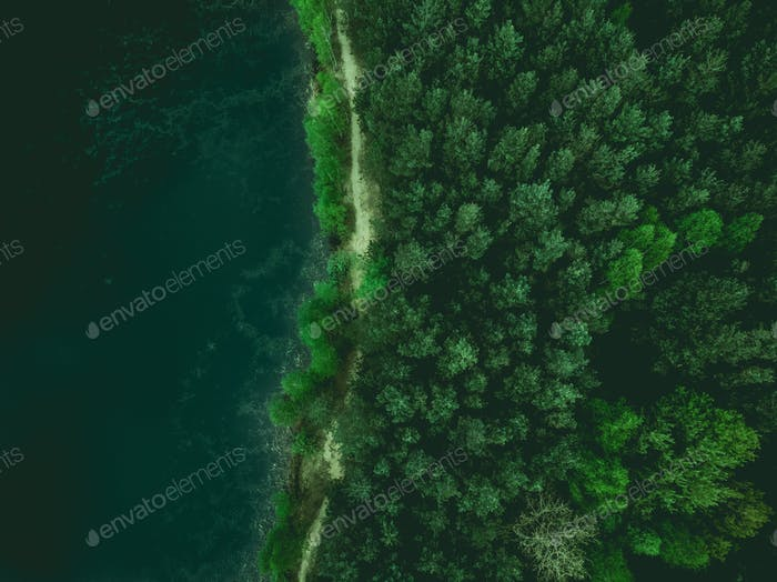 Forest and lake border, toned image from above