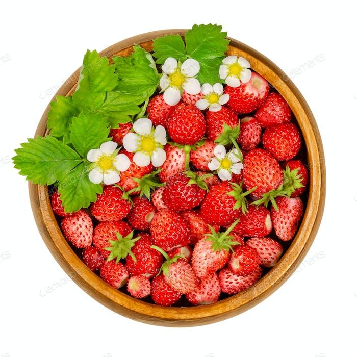 Wild strawberries, woodland strawberries in wooden bowl