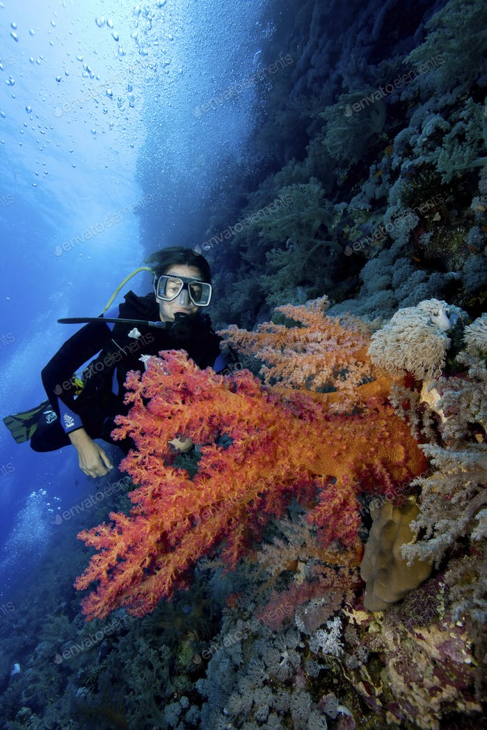 A scuba diver is framed behind a bouquet of soft corals.  The larger orange colored stalks of soft