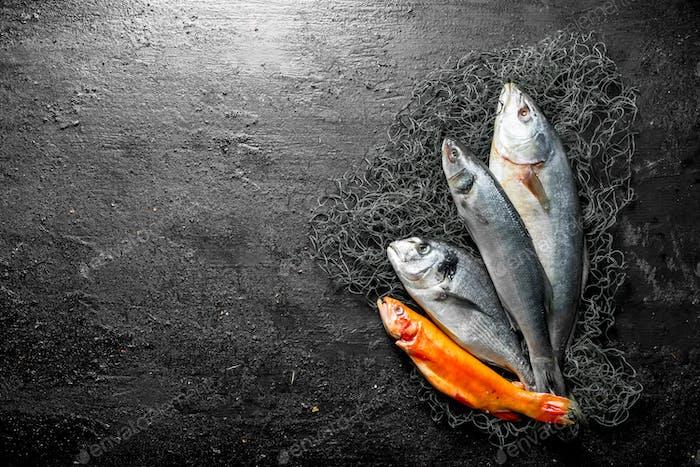 Fresh fish on the fishing net.