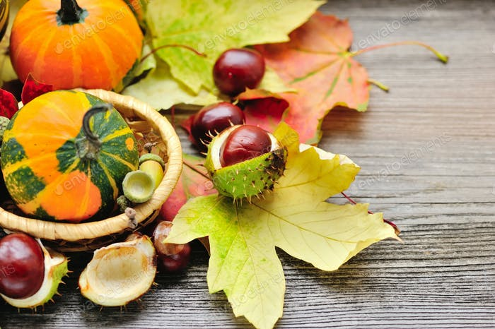 Fresh chestnuts with autumn leaves and mini pumpkins on wooden b