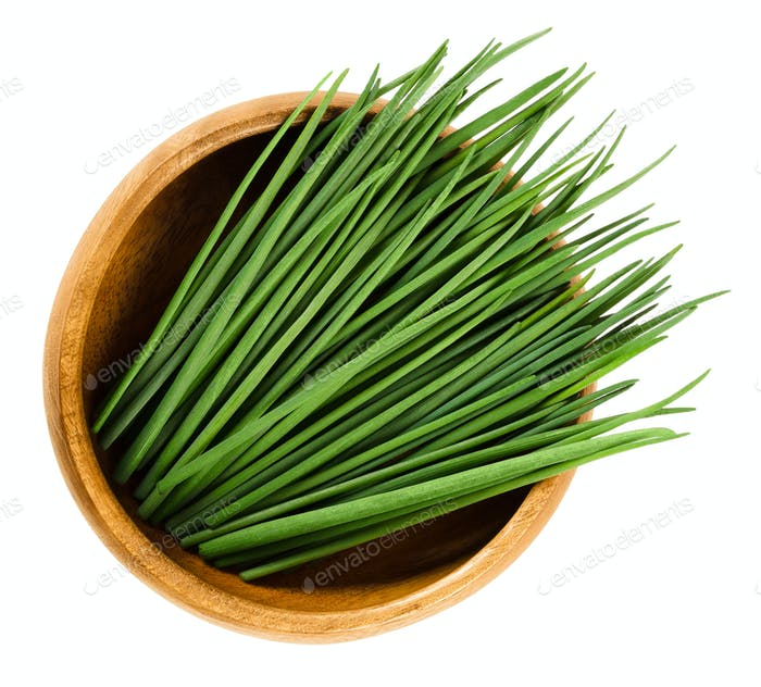 Chives scapes in wooden bowl over white