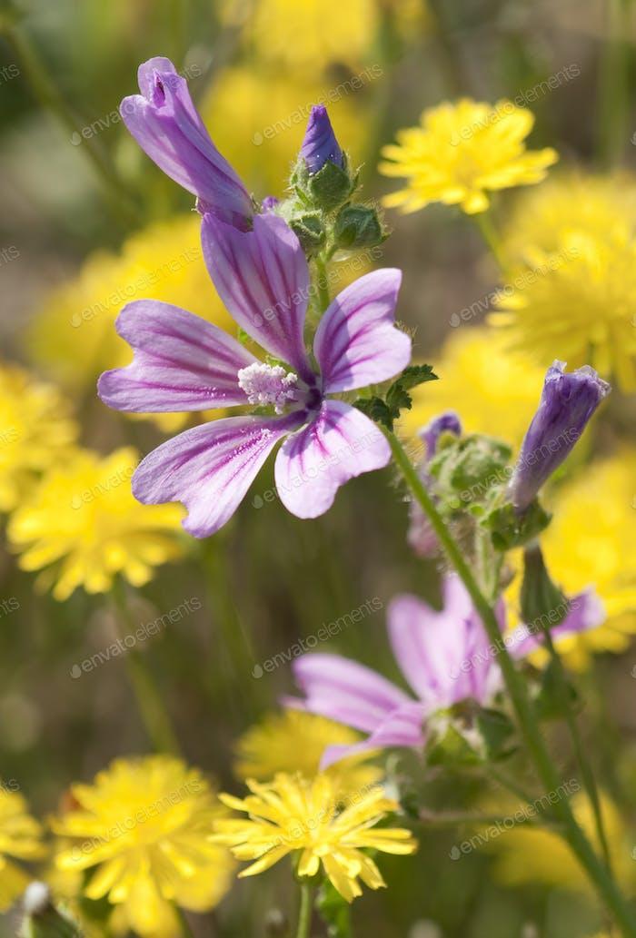 Mauve Flower in Dandelion Flower Field