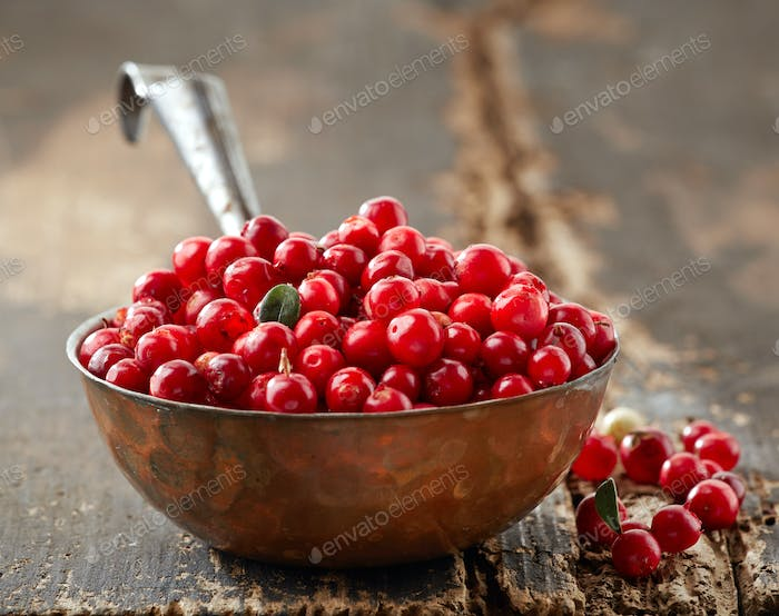 bowl of fresh cowberries
