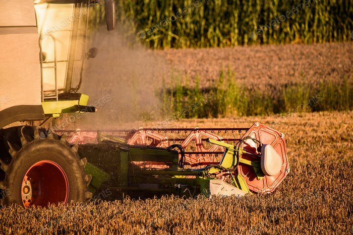 Harvesting wheat field with combine