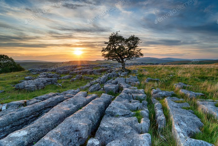 Sunset over a lonely windswept Hawthorn tree on a limestone pave