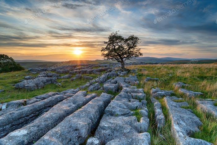Sonnenuntergang über einem einsamen windgefeilten Weißdornbaum auf einem Kalkstein pflastern